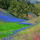Carpet of Color by Ann J. Sagel