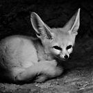 Foxy by Lisa Kenny