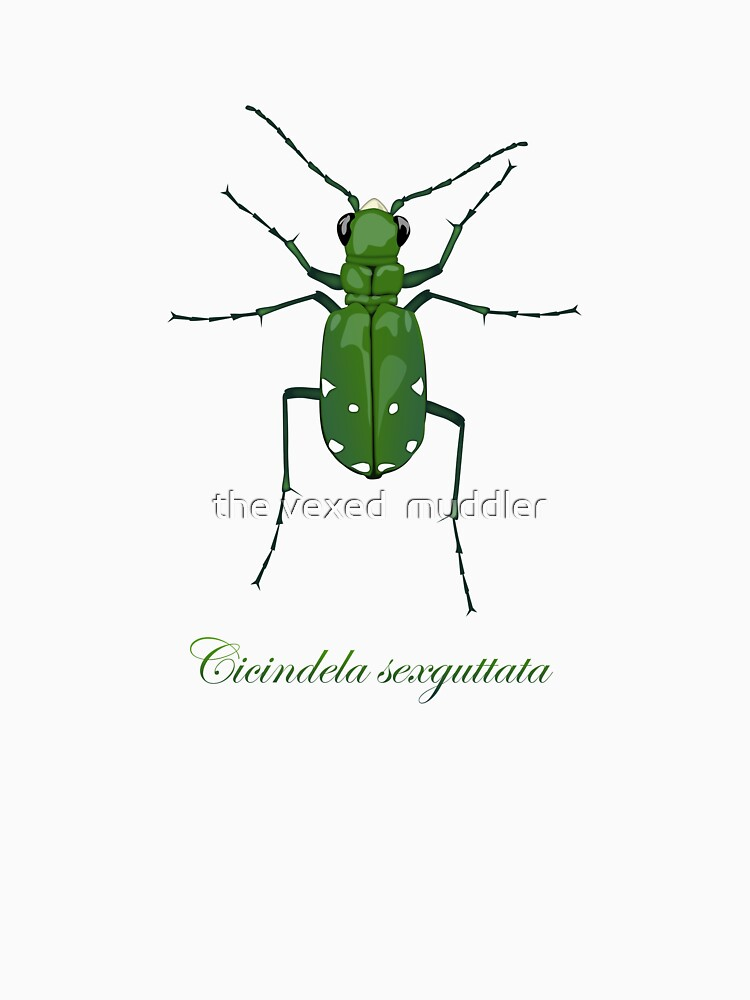 Six-spotted green tiger beetle, Cicindela sexguttata by thevexedmuddler