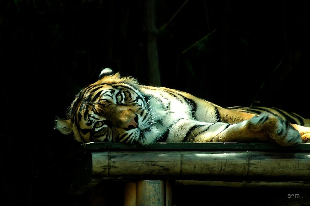 ~Snooze Time~ by a~m .