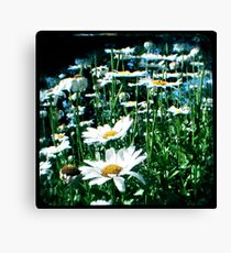 Field of flowers TTV Canvas Print