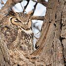 Peek-a-boo - little owlet peeking out by Eivor Kuchta