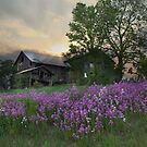 Country Living by Lori Deiter