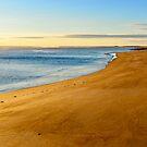 Plum Island Beach by danachirps