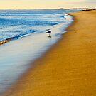 Seagull on Plum Island Beach by danachirps
