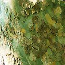 shedding bark  by Fiery-Fire