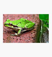 Kermit Photographic Print