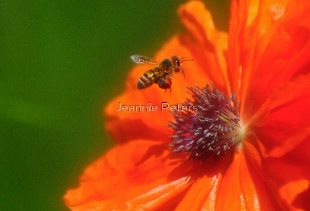 buzzing around by Jeannie Peters