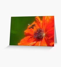 buzzing around Greeting Card