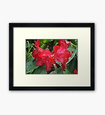 Red Crown Framed Print