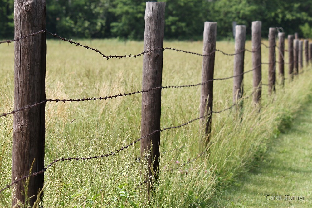 Along the Fence by Carol  Turner