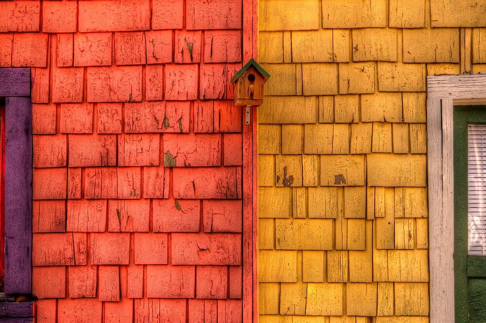 Color Blind Birds by Bob Larson