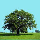 Mighty Oak Tree by soitwouldseem