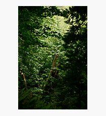 Rainforest on Vancouver Island Photographic Print