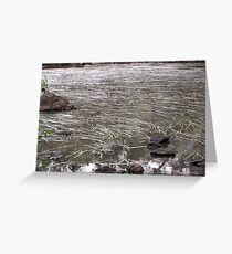 River of Grass-Jacksons Creek-two Greeting Card
