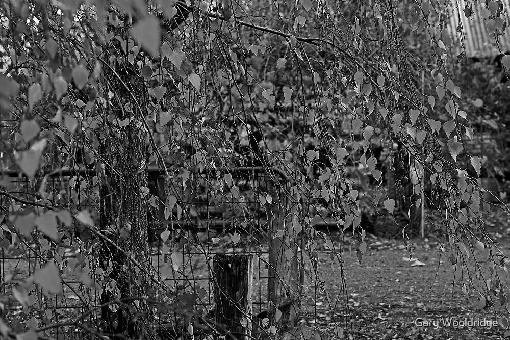 Autumn Black and White by Gary Wooldridge