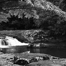 Gardener Falls Walk - Maleny - Hinterland - Sunshine Coast - Queensland - Australia by AMP  Al Melville Photography