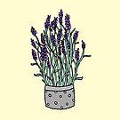 Lavender Love by hannahison
