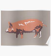 Tamworth Pig Poster