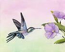 Hummingbird at Morning Glory by Charlotte Yealey