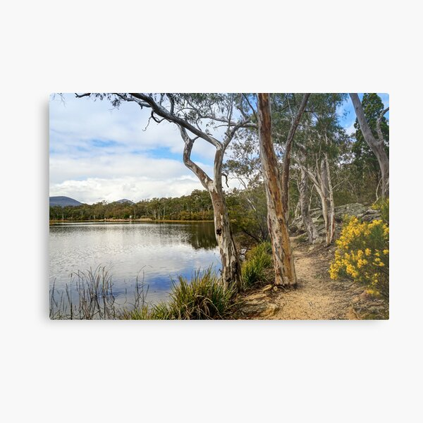 Dunns Swamp, Cudgegong River, Wollemi National Park Metal Print