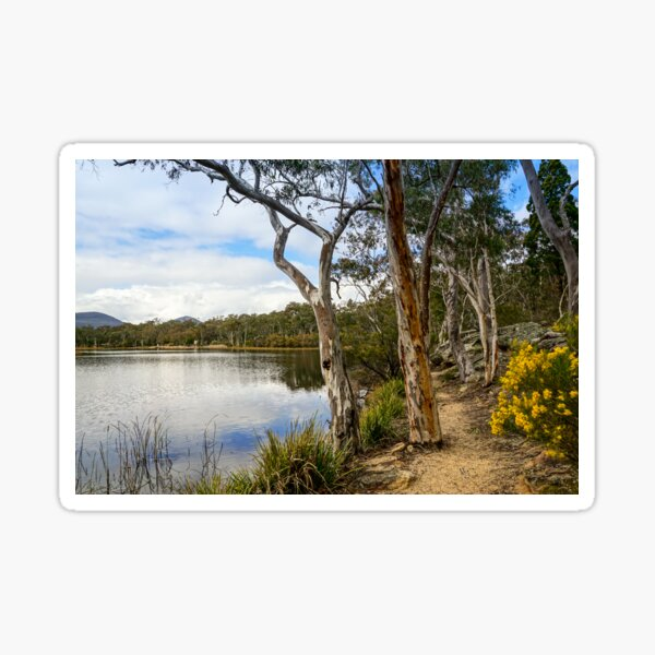 Dunns Swamp, Cudgegong River, Wollemi National Park Sticker