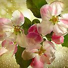 Apple Blossom by DAntas