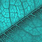 Leaf Venation 5 by JessicaMWinder