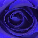 Rose of Blue ... by Wightstitches