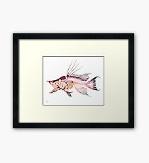 Hogfish Framed Print