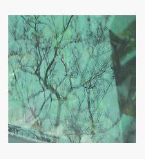 Reflect green - Reflejo verde Photographic Print