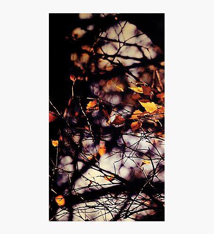 Autumn I Photographic Print