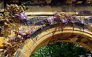 Wisteria Arch by Carol Bleasdale
