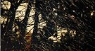 Winter light by Anne Staub