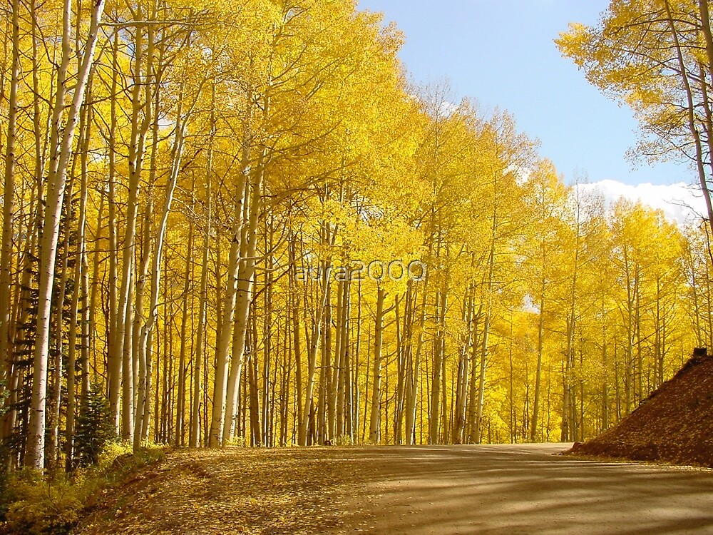 Aspen changing Colors  by aura2000