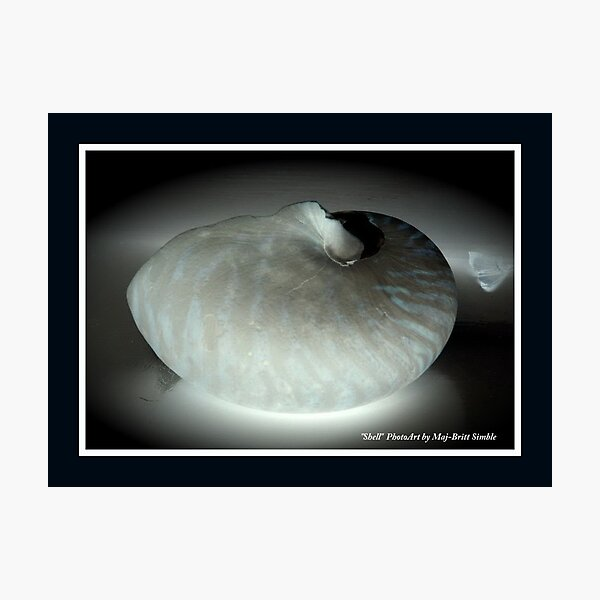 """Shell 3"" Photographic Print"