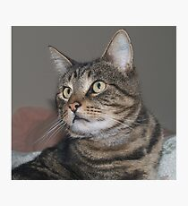 Jimmy-my Tabby Cat Photographic Print