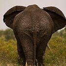 Wrinkle Rump by Explorations Africa Dan MacKenzie