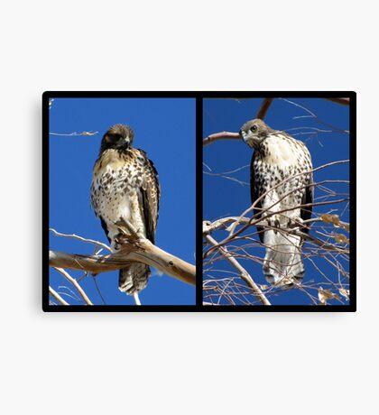 Redtailed Hawks ~ Final Goodbye Canvas Print