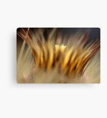 crown of thorns... Canvas Print