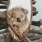 Baby koala  by CowshedUK