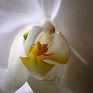 White by loiteke