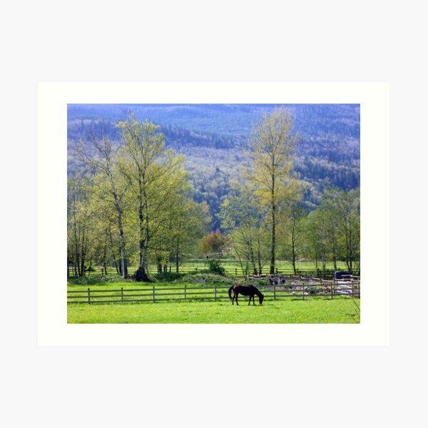 BC Horse Grazing Art Print