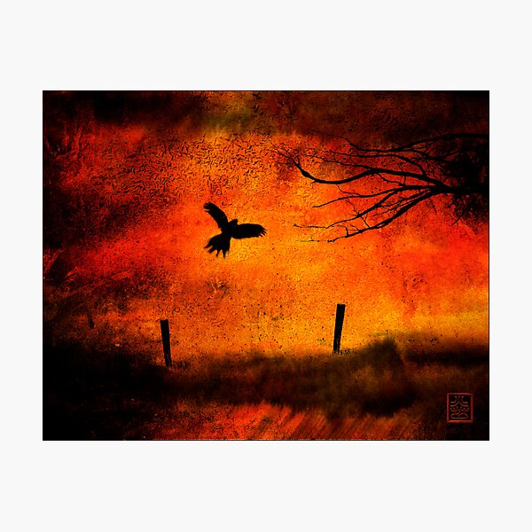 Wings Of Fire Photographic Print