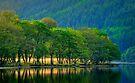 Loch Chon, morning light... by David Mould