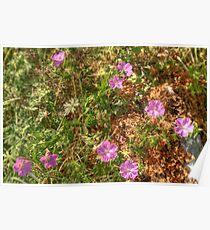 Beautiful Burren Flowers Poster