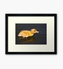 Hunt On A Fly Framed Print