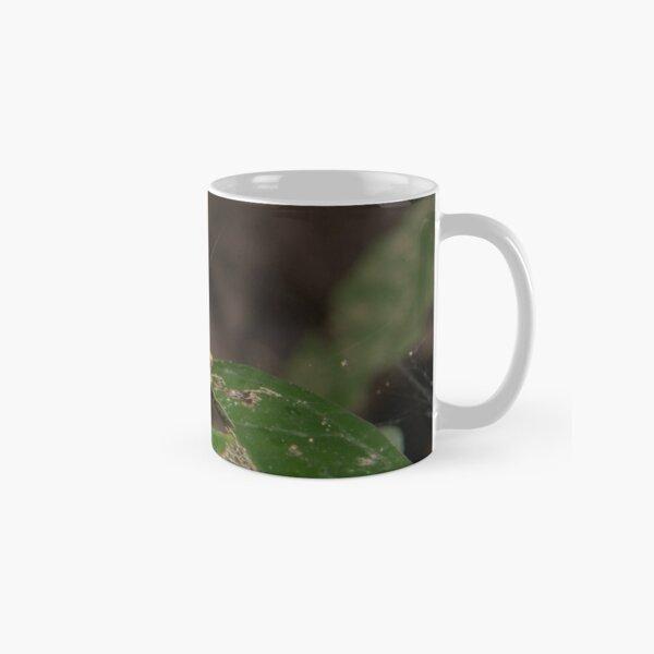Convict Tree Frog, Parque Nacional del Manu, Peru Classic Mug