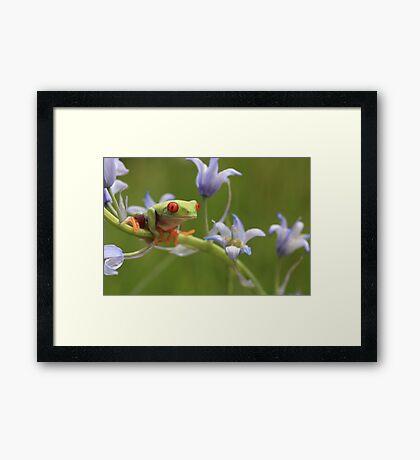 Amongst the bluebells Framed Print