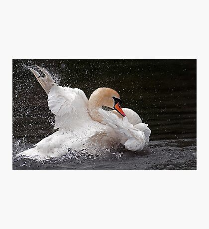 Shark Swan Photographic Print